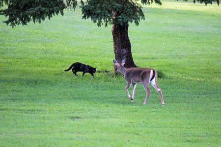 meets: Deer meets cat