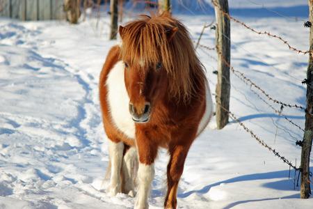 Pony Banco de Imagens