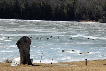 stephen: Congelato Stephen Foster Lake