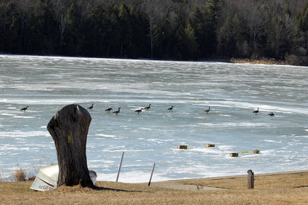 foster: Frozen Stephen Foster Lake