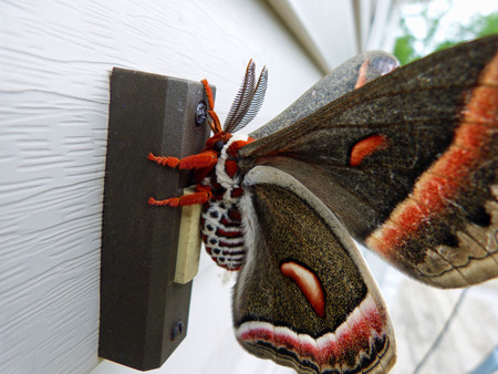 Unusual Butterfly
