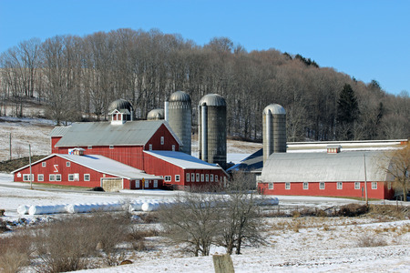 silos: Classic red barn. Classic red barn surrounded by multiple silos and bales of hay.