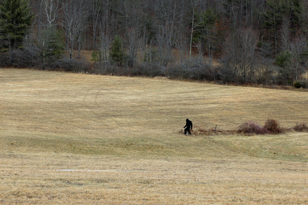 sighting: Bigfoot sighting. Bigfoot can be seen in this brown field. Relax, just a cutout. Stock Photo