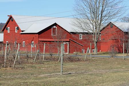 井戸の囲いのブドウ畑は、冬の赤い納屋を維持しました。