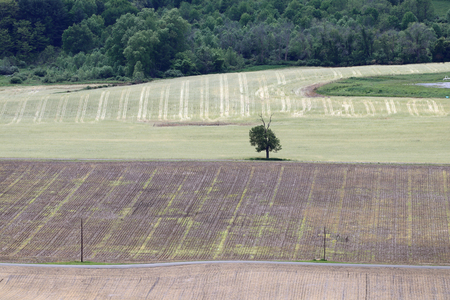 A lone tree stands between mowed and plowed fields. Stock Photo