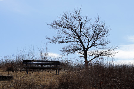 A place to sit on a bench near a tree. Imagens
