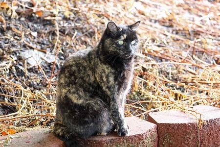 A tortoiseshell cat sitting on a retaining wall.
