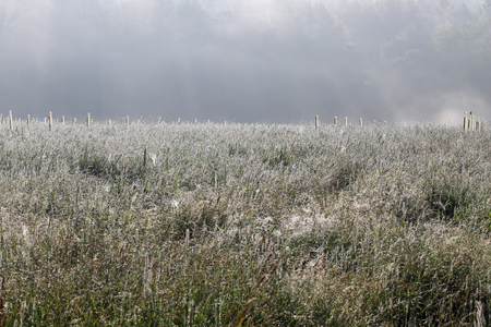 A dew covered field in the early morning fog with stakes where trees are planted.