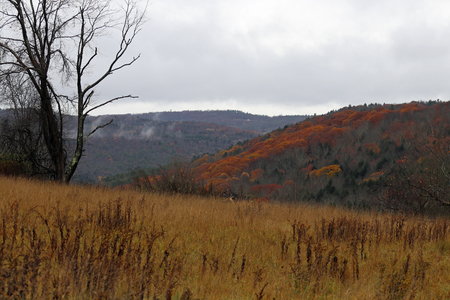 A rustic looking autumn in the hills of Pennsylvania. 免版税图像