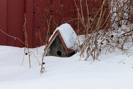 A birdhouse covered with snow with the remains of flowers around it. Reklamní fotografie
