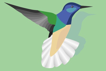 Flying hummingbird on green background
