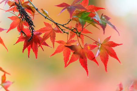 leafs: Beautiful autumn leafs Stock Photo