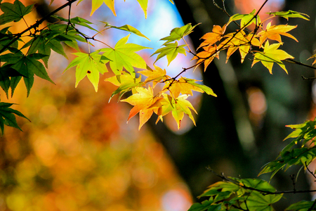 leafs: Yellow leafs with tree background