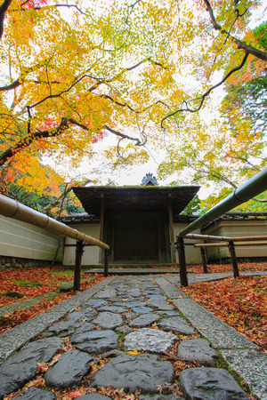 japanese temple: Vivid branches above stone path in Japanese temple