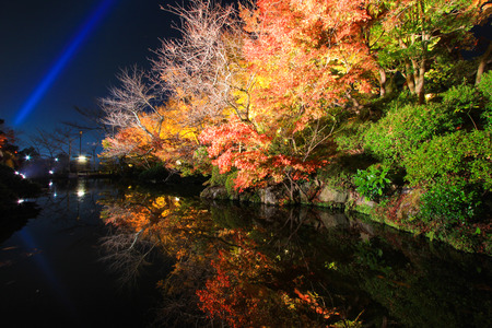 miror: Night scene of vivid trees