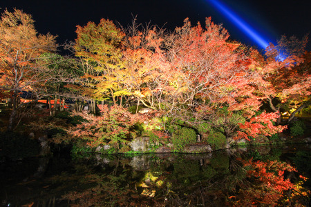 miror: Reflection of vibrant trees Stock Photo