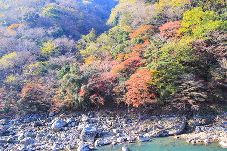 terrific: Terrific scene of colorful forest nearby a river