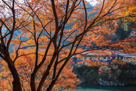 riverside trees: Colorful autumn trees on a riverside opposite to residential areas