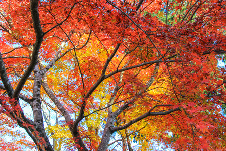 lively: Lively color of nature during autumn period Stock Photo