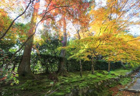 terrific: Terrific forest scene