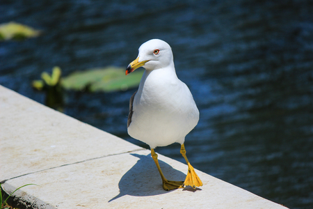 superficial: White bird nearby a lake Stock Photo