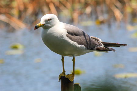 superficial: White bird on a shallow pond