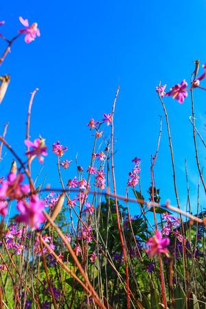non: Beautiful nature at Non Son Flower Field (Tung Salaeng Luang Nation Park), Phitsanulok, Thailand Stock Photo