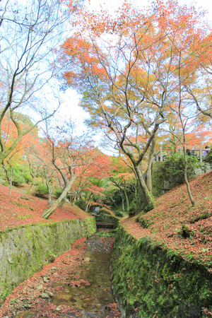 autumn leafs: Path covered with autumn leafs in Japan
