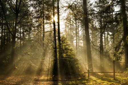 Morning sun in the forrest Standard-Bild