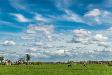 animales de granja: Vacas en el Prado