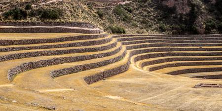 gelding: Inca laboratory