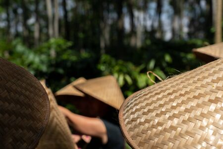 Traditional bamboo hat in a conical shape. In Asia these hats are often worn as sun protection Standard-Bild - 130817669