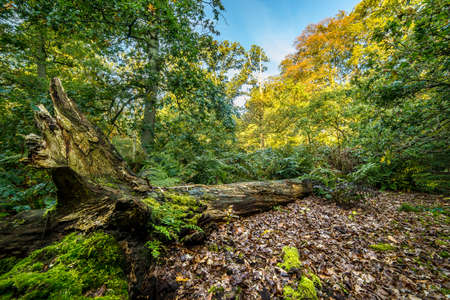 A fallen tree in the middle of the forest. There are green shrubs around the tree