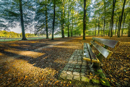 An empty wooden bench in the forest during a sunny day Standard-Bild