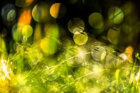 An Abstract macro shot of blurry dew drops creating a dreamy effect