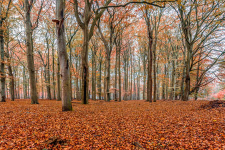 A forest with trees in autumn colors. The color of the leaves creates a warm atmosphere.