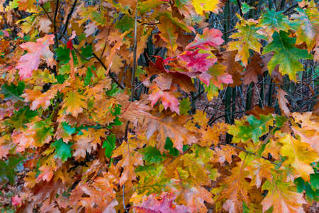 A close up image of leaves in fall colors and blurred background