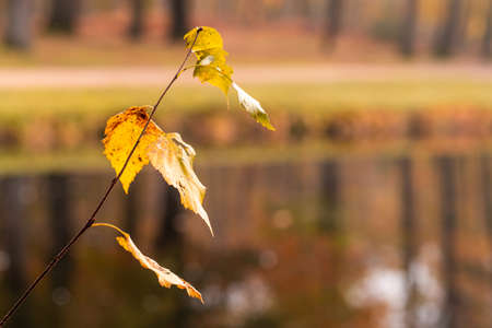 A close up image of leaves in fall colors with blurred background Standard-Bild