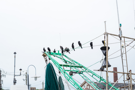 seabirds: Black seabirds perched on the mast of fishing boat.
