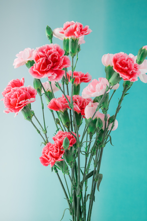 Close up of multicolored carnations for holiday. Greeting card concept.