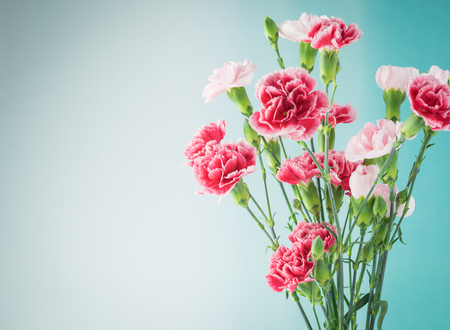 Close up of multicolored carnations for holiday. Greeting card concept. Copy space.