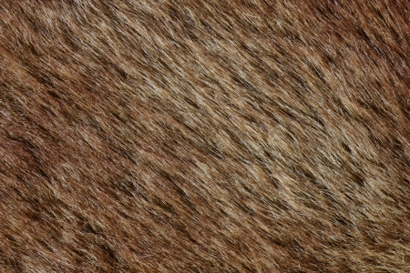 texture capelli: Close-up colpo di astratto bachground marrone pelliccia (texture)
