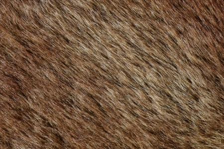 textura pelo: close-up shot de extracto de piel marr�n bachground (textura)