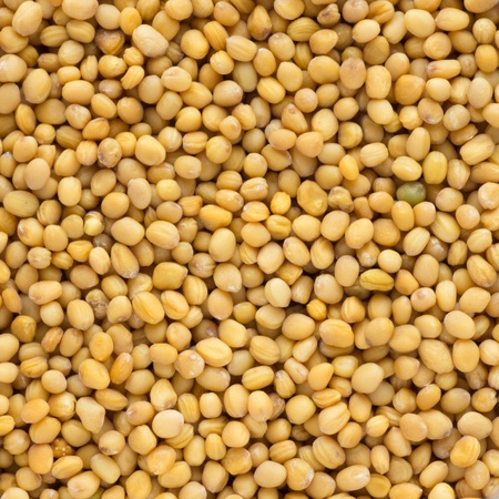 close up shot of brown mustard seed Stock Photo - 13322943