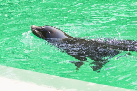 photo of the performance of a seal in the Hungary Zoo photo
