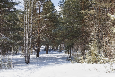 sunligh: the photo of oad in a wonderful winter forest
