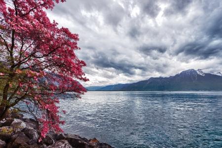 Blumen gegen Berge und See Genf aus der Embankment in Montreux. Schweiz