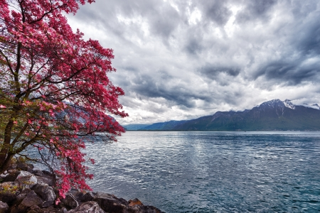 Flowers against mountains and lake Geneva from the Embankment in Montreux. Switzerland photo