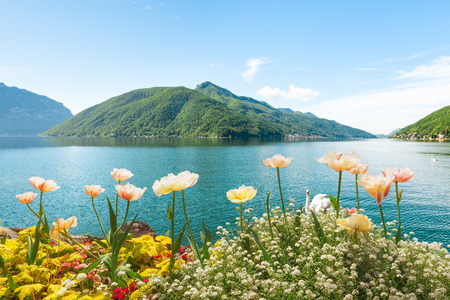 Summer picture of flowers near lake shore, Lugano, Switzerland photo