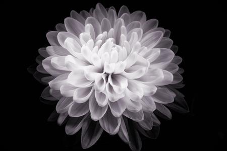 myst: digital art: shiny flower against black background